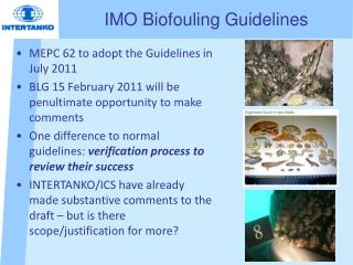 IMO Biofouling Guidelines