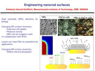 Gold nanorods (NRs) attractive for biology Changing NR surface chemistry: Improves cell uptake