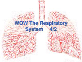 WOW The Respiratory System4/2