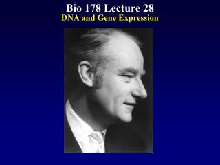 Bio 178 Lecture 28