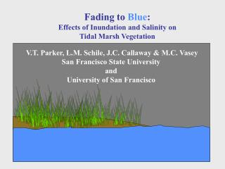 Fading to  Blue : Effects of Inundation and Salinity on  Tidal Marsh Vegetation