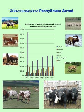 Животноводство  Республики Алтай