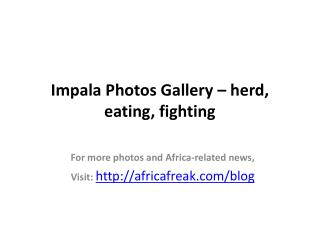 Impala photos to download for free