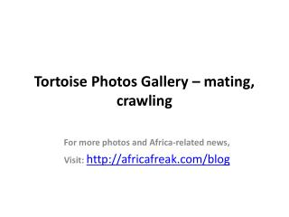 Photos of tortoise to download for free