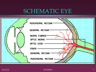 SCHEMATIC EYE