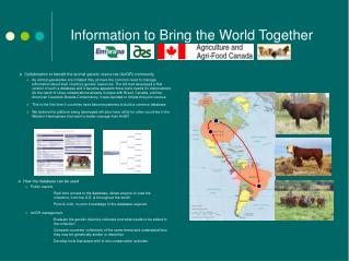 Information to Bring the World Together