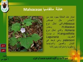 عائلة  مالفاسيا  Malvaceae