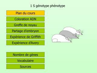 1 S g notype ph notype