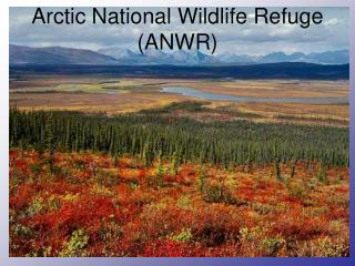 Arctic National Wildlife Refuge (ANWR)