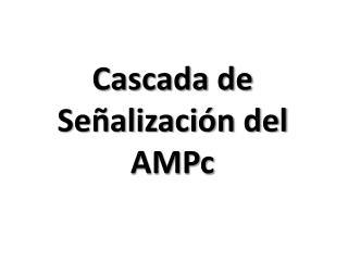 Cascada de Se�alizaci�n del AMPc