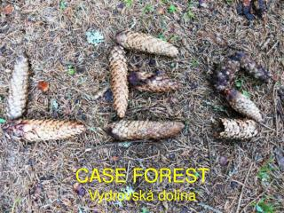 Case Forest