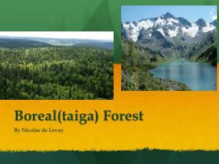 Boreal (taiga)  Forest