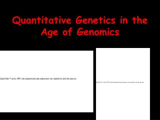 Quantitative Genetics in the Age of Genomics
