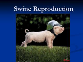 Swine Reproduction