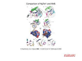 H  Hashimoto  et al.  Nature  000 ,  1 -5 (201 4 ) doi:10.1038/nature 12905