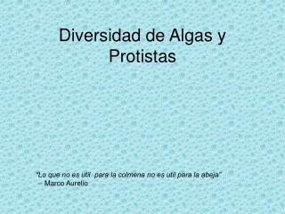 Diversidad de Algas y Protistas