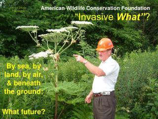 """Invasive  What"" ?"