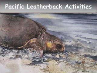 P acific Leatherback Activities