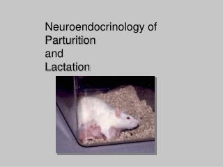 Neuroendocrinology of  Parturition and Lactation