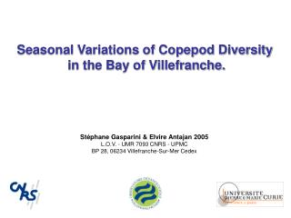 Seasonal Variations of Copepod Diversity  in the Bay of Villefranche.