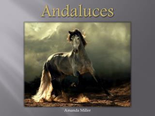 Andaluces