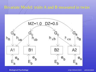 Bivariate Model: traits A and B measured in twins