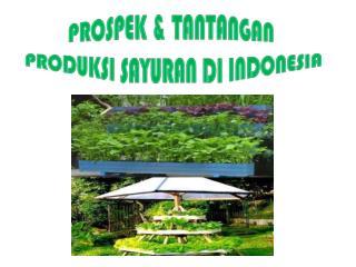 PROSPEK & TANTANGAN  PRODUKSI SAYURAN DI INDONESIA