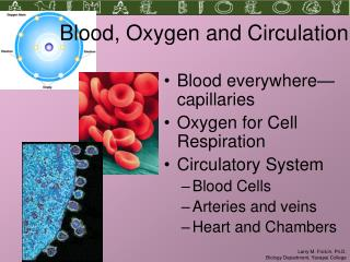 Blood, Oxygen and Circulation