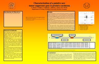 Characterization of a putative new  tumor suppressor gene in prostate carcinoma