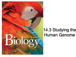 14.3 Studying the  Human Genome