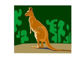The kangaroo