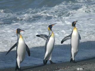 北京四中  电话 :  中国科学探险协会 电话 : 82998373 刘丽   13520382330 Lily_liu@mail.iggcas.ac