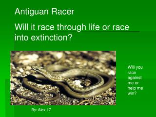 Antiguan Racer  Will it race through life or race into extinction?