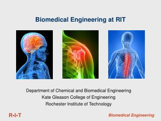 Biomedical Engineering at RIT