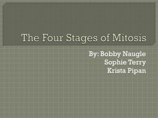 The Four Stages of Mitosis