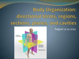 Body Organization:  directional terms, regions , sections, planes, and cavities
