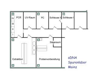 aDNA Spurenlabor Mainz