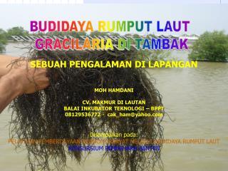BUDIDAYA RUMPUT LAUT  GRACILARIA DI TAMBAK