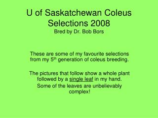 U of Saskatchewan Coleus Selections 2008 Bred by Dr. Bob Bors