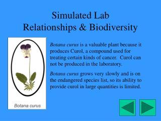 Simulated Lab Relationships  Biodiversity