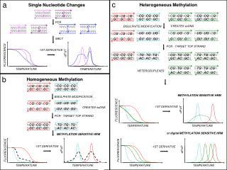 Single Nucleotide Changes