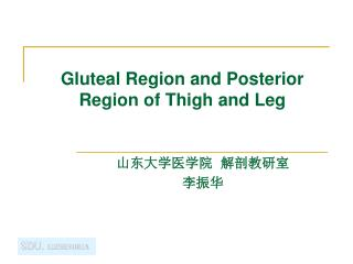 Gluteal Region and Posterior Region of Thigh and Leg