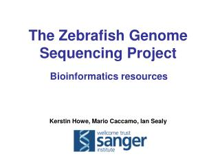 The Zebrafish Genome Sequencing Project Bioinformatics resources