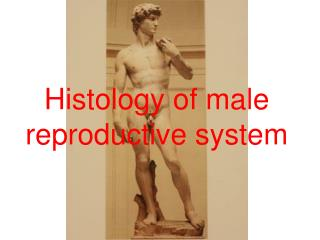Histology of male reproductive system