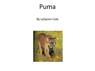 Puma By LeQuinn Cole