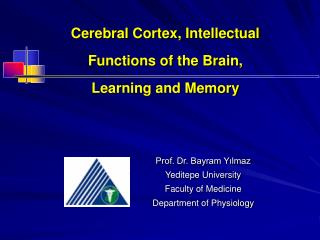 Cerebral Cortex, Intellectual Functions of the Brain, Learning and Memory