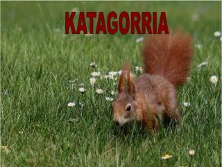 KATAGORRIA