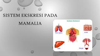 Sistem Ekskresi pada Mamalia