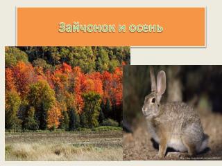 Зайчонок и осень