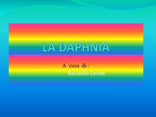 LA DAPHNIA